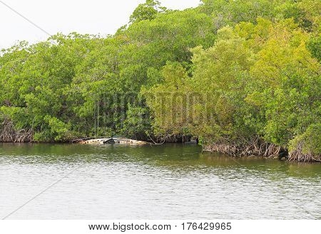 Wrecked boat in the Florida Keys in the water next to riparian vegetation.