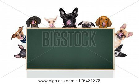Row Of Dogs Behind Placard Or Banner