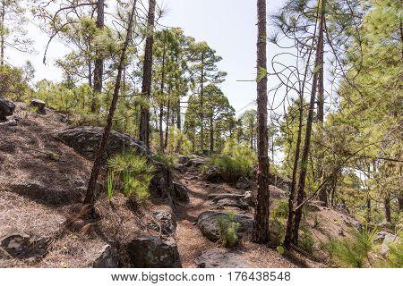 Hiking trail in Tamadaba Natural Park in Gran Canaria