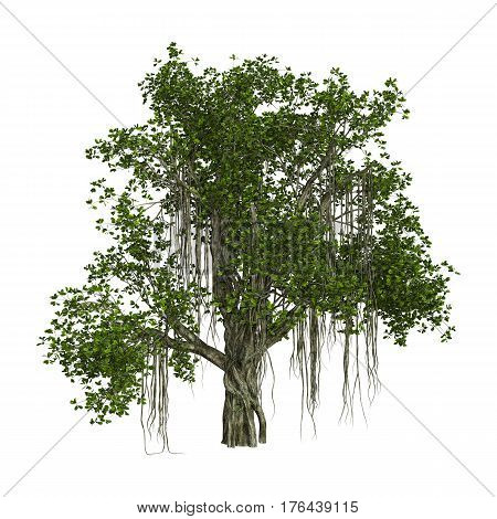 3D rendering of a banyan tree isolated on white background