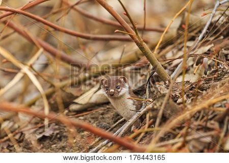 fur animal hides in the bushes, fur animal cunning, secretive way of life, animals, wildlife