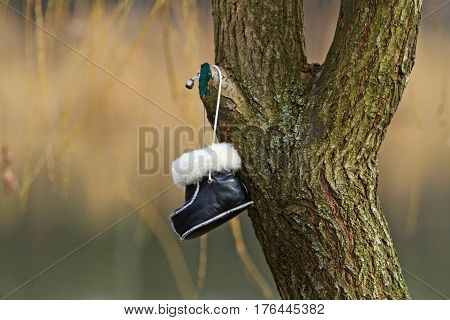 lost children shoes hanging from a tree, Childhood lost things, clothes, shoes