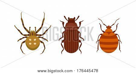 Insect icon flat isolated nature flying bugs beetle ant and wildlife spider grasshopper or mosquito cockroach animal biology graphic vector illustration. Insecticide graphic cockroach bumblebee.