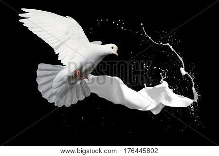 white dove and spray white paint, cosmetics, symbol of purity, milk, spray, rejuvenation