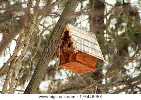 Wooden birdhouse in the forest handmade outdoors