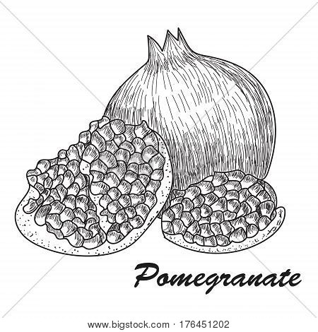 Pomegranate fruit, berry. Organic nutrition healthy food. Engraved hand drawn vintage retro vector Pomegranate engraving sketch etch illustration. Isolated on white background