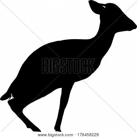 Silhouette of a damara dik dik sitting down - digitally hand drawn vector illustration