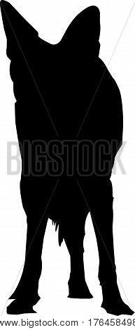 Silhouette of a blackbacked jackal digitally hand drawn vector illustration