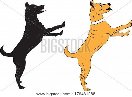 Dog jumping asking someone something. Black and color Vector illustrations on white background