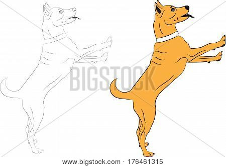 Dog jumping asking someone something. Contour and color Vector illustrations on a white background