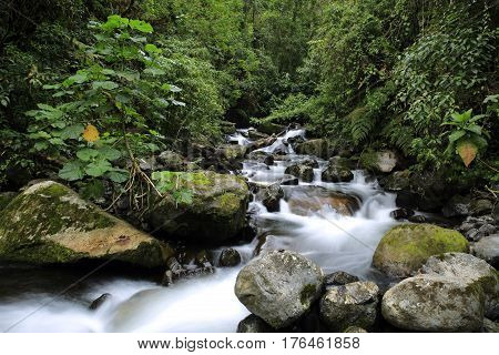 Stream in the Cloud Forest. Cerro Punta Boquete Panama