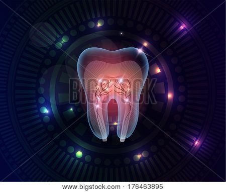 Beautiful Transparent Tooth Cross Section
