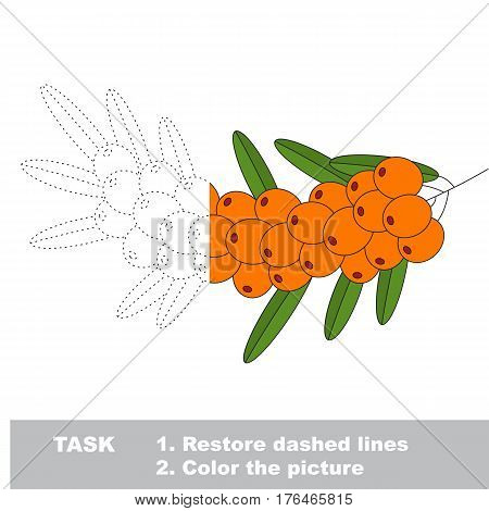 Buck thorn branch in vector to be traced. Restore dashed line and color the picture. Easy educational kid gaming with simple level of difficulty.