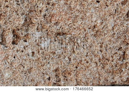 Porous surface of shell rock. Construction material