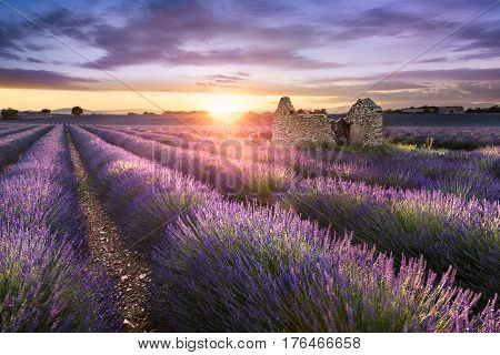 Lavender field in Provence near Valensole France