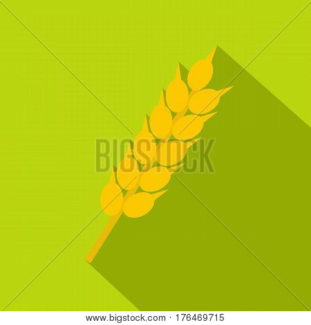 Wheat ear icon. Flat illustration of wheat ear vector icon for web isolated on lime background