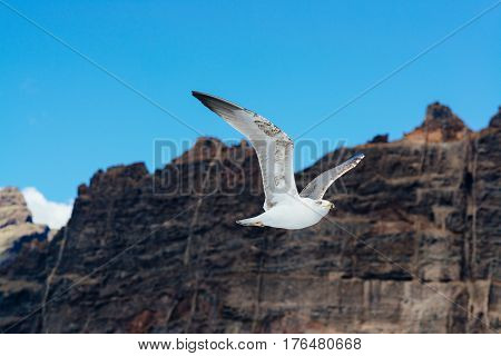 White Seagull Flying Over Ocean Near Rocky Cliffs