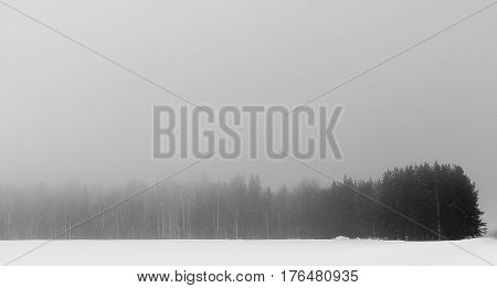 the winter forest has plunged into fog