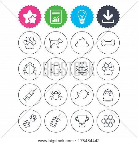 Download, light bulb and report signs. Pets and Insects icons. Dog paw. Cat paw with clutches. Bone, feces excrement and vaccination. Honey, bee and honey comb. Best quality star symbol. Flat buttons