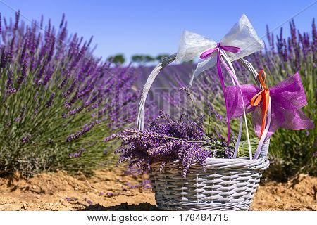 lavender field in south of France with decorative basket