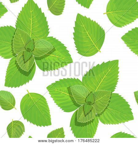 Fresh mint vector seamless pattern. Green leaves isolated on white background. Spice symbol. For food design, restaurant, wrapping, health care products. Can be used as background, label, decoration
