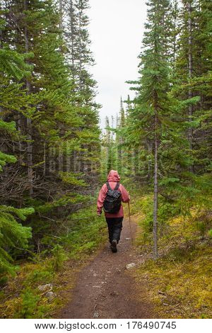 Hiking Rainy Autumn Fall Boreal Forest Taiga Trail