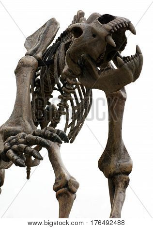 Cave bear skeleton prehistoric  animals objects isolated