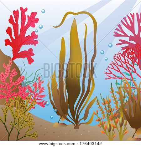 underwater Algae seaweed deep elements phycology vector
