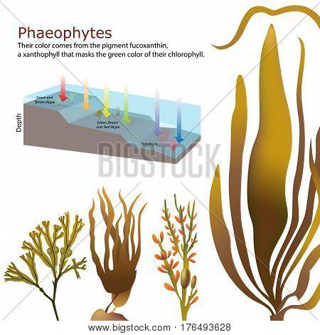 underwater brown Algae seaweed deep elements vector