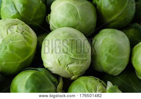 Brussel Sprouts Filling Frame
