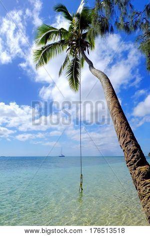 Leaning Palm Tree With Rope Swing At Pangaimotu Island Near Tongatapu Island In Tonga