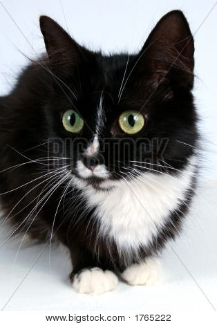 Black And White Cat Images Illustrations Vectors Free Bigstock