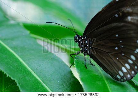 A butterfly feeding on green leaf in a summer garden