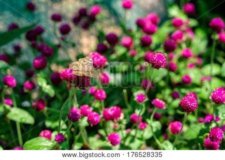 A butterfly feeding on flower in a summer garden