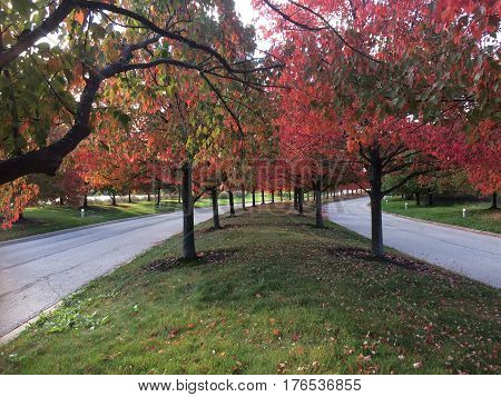 Early fall morning with trees showing beautiful colors