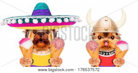 Funny dogs wearing t-shirt and holding ice cream. Party and celebration concept