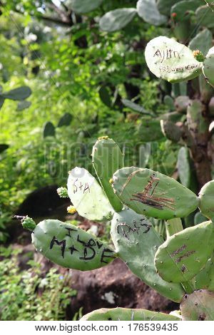Name initials as symbols of love cut out into cactus.Letters curved out into prickly pear leaves.
