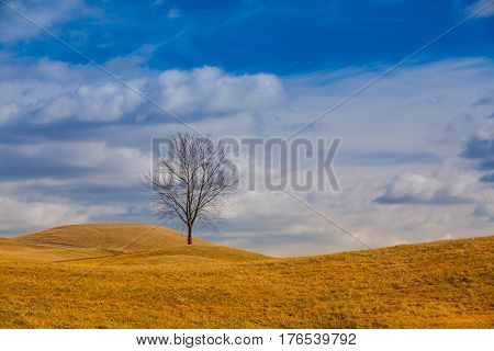 Lonely trees on the hill. Autumn scenery.
