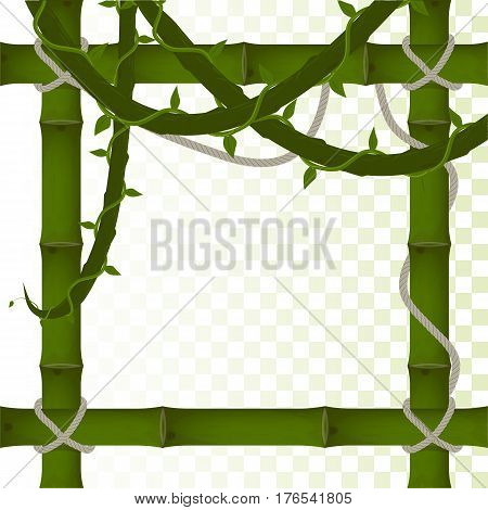 vector frame of green bamboo on a transparent background. hanging rope and vines. mockup for the design