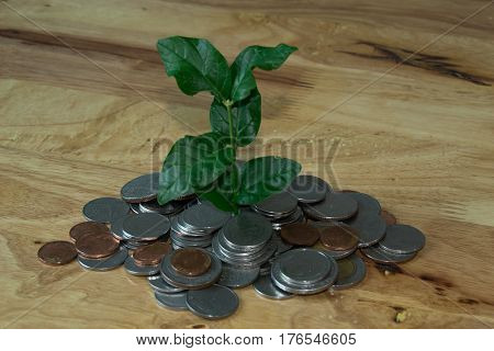 Plant in coins mound on wood table. it's business growth.