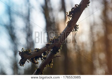Dosh and cobweb on a branch in the sunlight