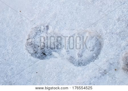 Footprint of a Horse in Snow. Winter season.