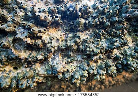 Fossil Shell Beach - ancient shell cemetery close-up, Krabi, Thailand