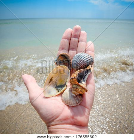 Three beautiful marine shells in human hand and bright blue sky on the beach. Beautiful shell in a male hand, sand and bright sea. Sea background for design postcard and calendar
