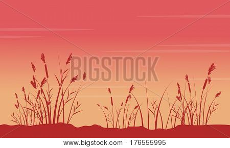 At sunrise with coarse grass scenery silhouettes illustration