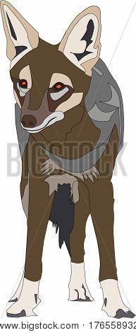 Portrait of a standing blackbacked jackal, looking into the cam, front view, hand drawn vector illustration isolated on white background