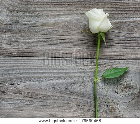 Elegant white rose on a long stem with green leaves on old wooden background