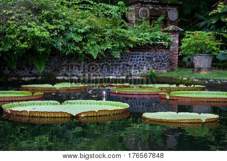 Large water lilies Lotus in a pond with flowers in Bali Tirta Gangga Indonesia poster