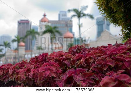 Kuala Lumpur Malaysia - November 1 2014: A flower bed in front of the former palace of the Sultan Abdul Samad in which today is the Supreme Court of Malaysia.
