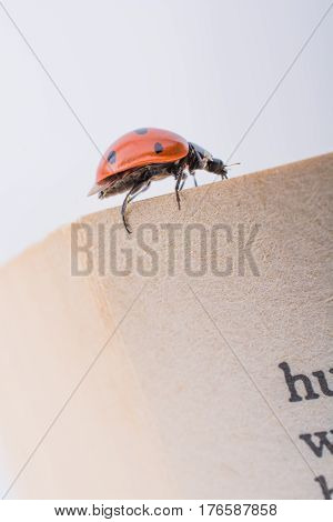 Beautiful photo of red ladybug walking on paper